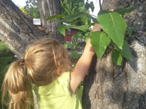 Granddaughter, Makayla, climbing a tree for the very first time!